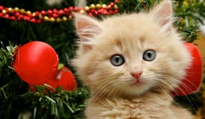 gattino, albero di natale